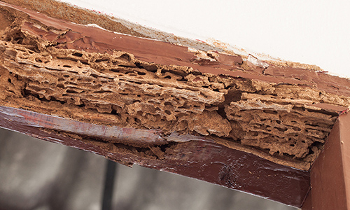 Termite damage on a wooden beam